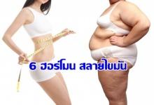 6 ฮอร์โมน สลายไขมัน ที่คนอยากผอม ต้องรู้จักไว้